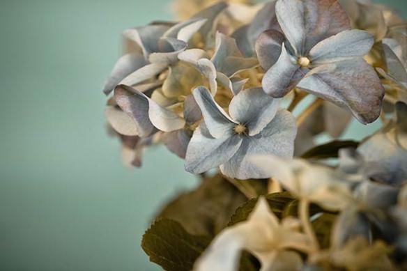 Tableau Fleur photo Hydrangea