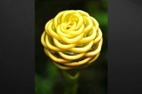 Tableau Decoration Fleur de Gingembre - Izoa