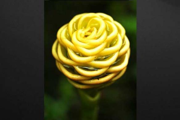Toile Deco Fleur de Gingembre