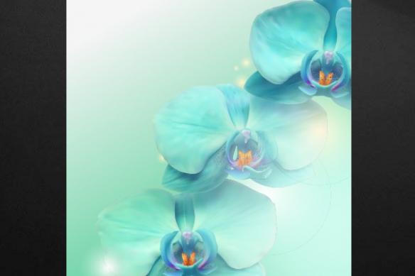 tableau déco fleur Phal hybride