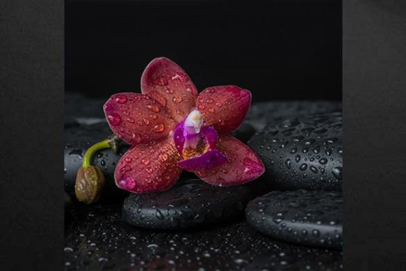 Tableau déco fleur Mahora