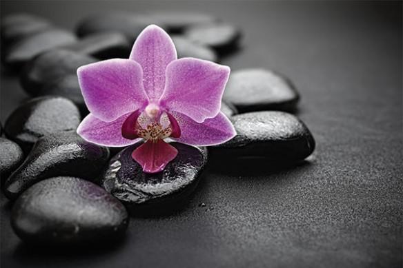 Papier peint mur orchidée violette