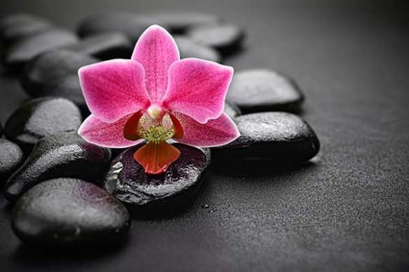 Papier peint Zen orchidée rose