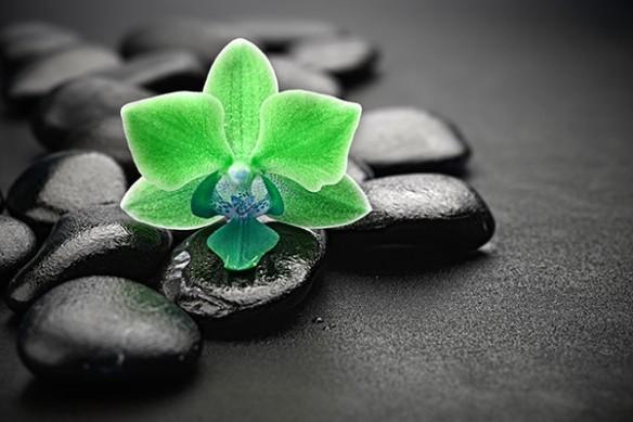 Papier peint déco zen orchidée vert