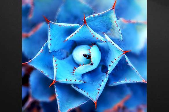 Tableau design cactus bleu