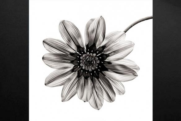 Tableau déco noir et blanc éclat de pétales