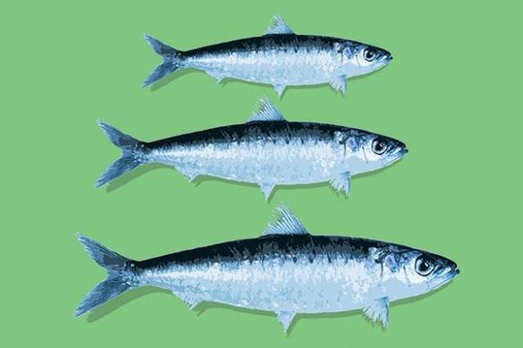 Tableau cuisine vert sardines