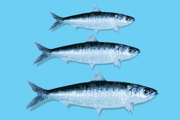 Tableau deco contemporain poisson