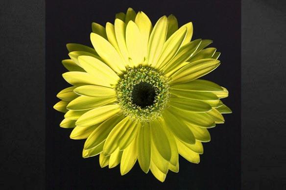 Tableau déco mural fleur jaune