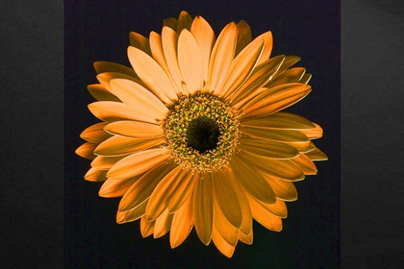 Toile déco fleur orange