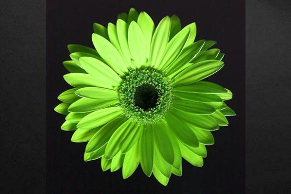 Toile imprimée fleur verte