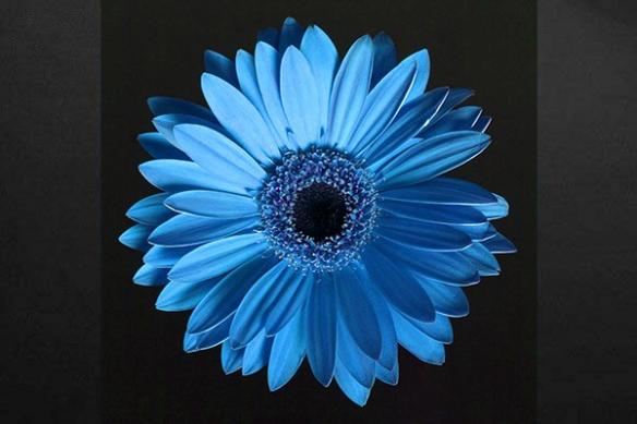 Tableau moderne fleur bleu