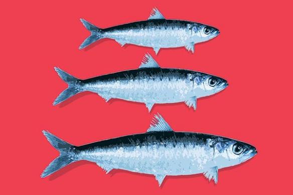 Tableau cuisine rouge sardines