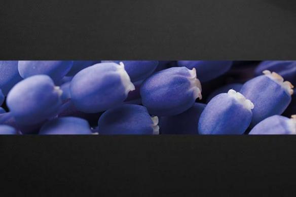Papier peint photo fleur