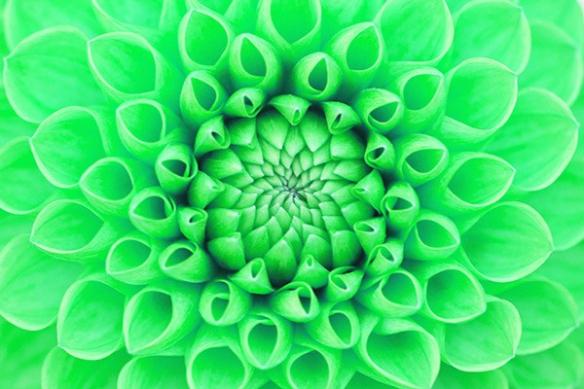 Déco murale fleur verte
