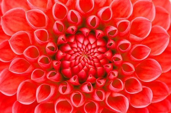 Toile imprimée fleur rouge
