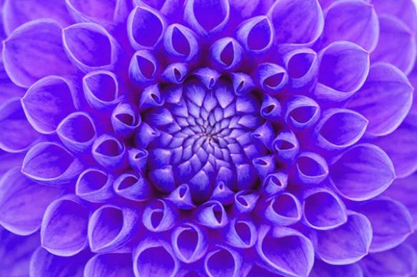 Tableau photo fleur violet