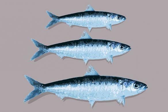 Tableau cuisine deco poisson