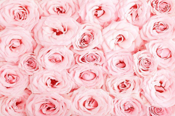 Toile fleur mille roses