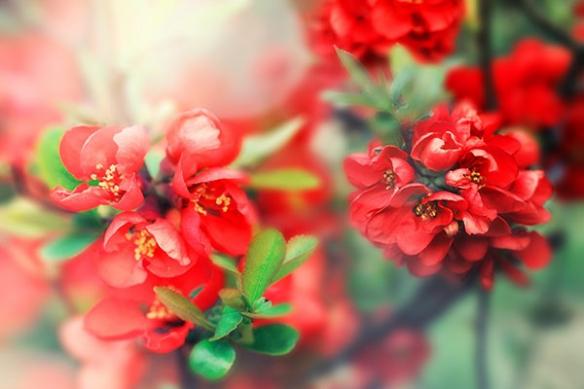 Tableau fleur Doux réveil
