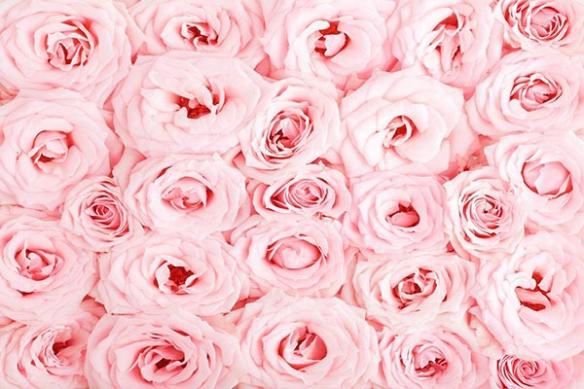 Papier peint mur Mille Roses