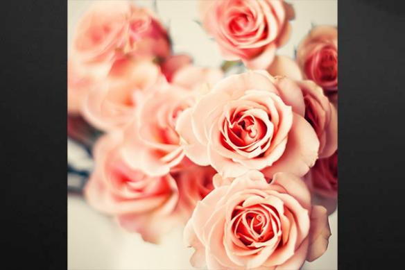 Toile imprimée roses sauvages