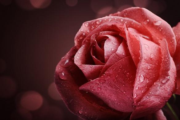 Tableau moderne Rose Nahéma