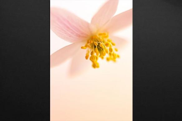 Tableau déco Fleur Pistile Jaune