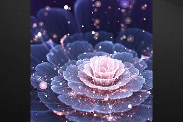 Toile déco Fleur Pivoine de l'Himalaya