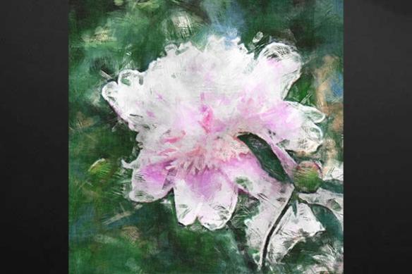 Tableau fleur Rose Aquarelle