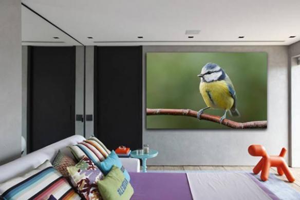 Tableau design Oiseau Jaune bleu