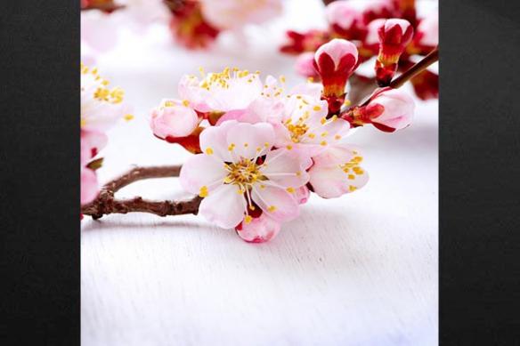 Toile déco Vent Floral