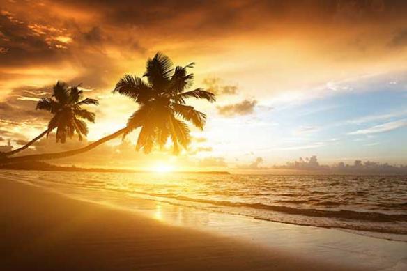 Toile déco paysage Palmiers