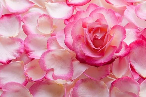 Tableau fleur Pétales Intenses