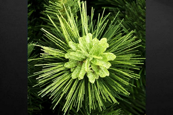 plante epines pailletée