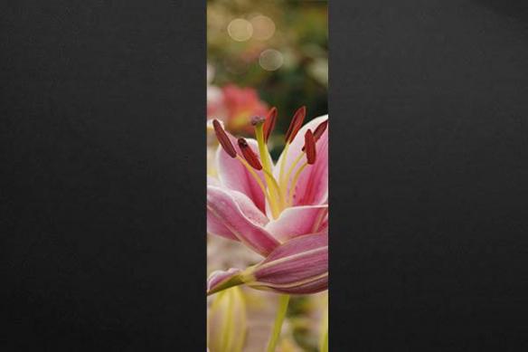 Papier peint déco romantique Fleur de Lys