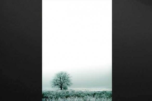 Tableau paysage zen arbre