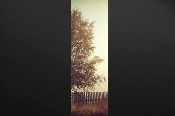 lé papier peint photo payage arbre marron