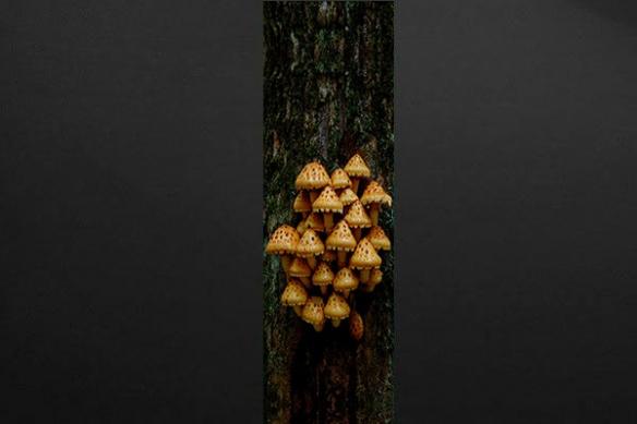 Deco murale lé papier peint champignons