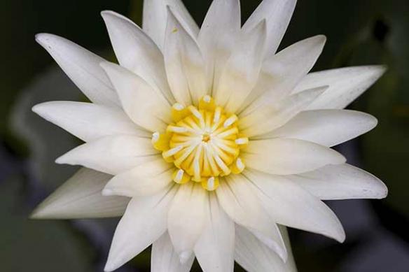 Décoration séjour zen poster mural fleur de lotus