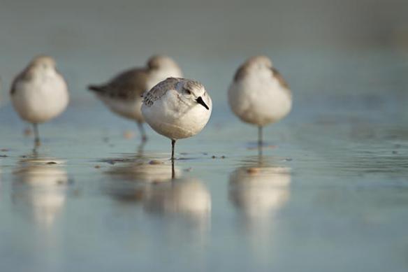 deco mur toile imprimée oiseaux mouettes
