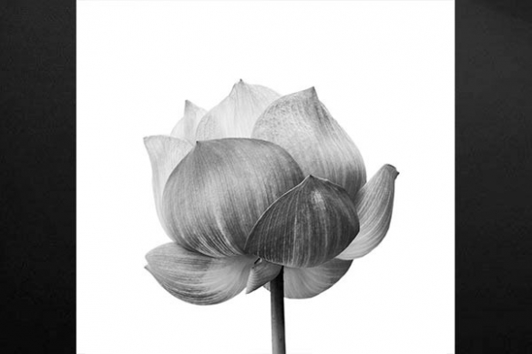 Décoration mur tendance photo fleur noir et blanc