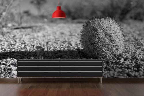 deco salon original poster cactus noir et blanc