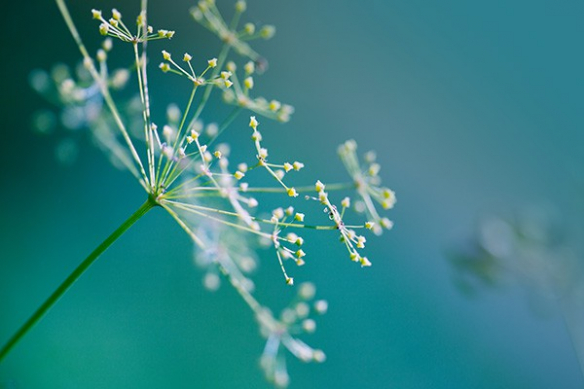 poster xxl photo macro fleur