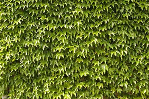 déco mur poster mural feuillage mur vegetal