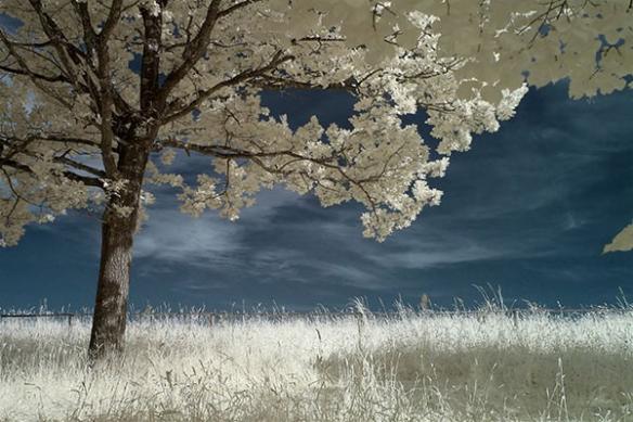 poster photo arbre en fleur