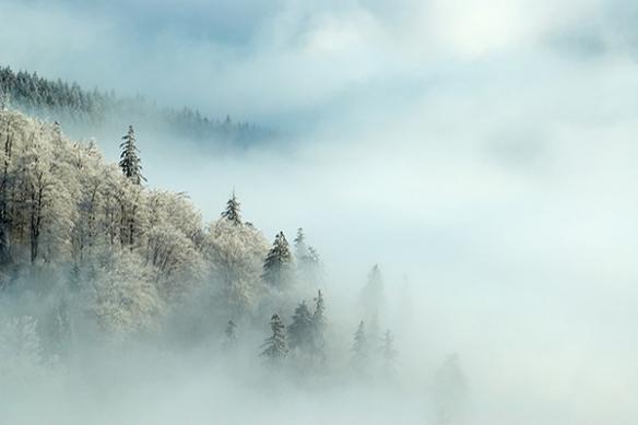 foret brouillard poster