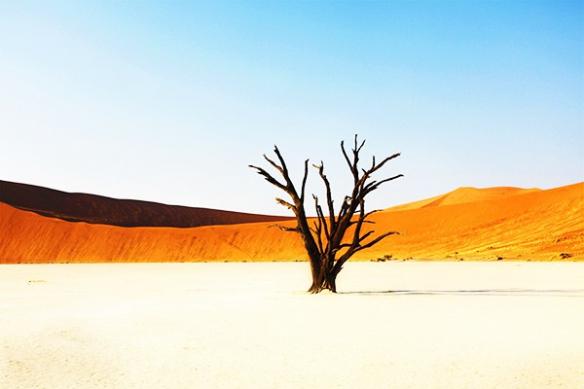 arbre desert