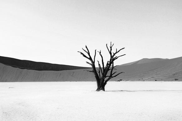 desert noir et blanc