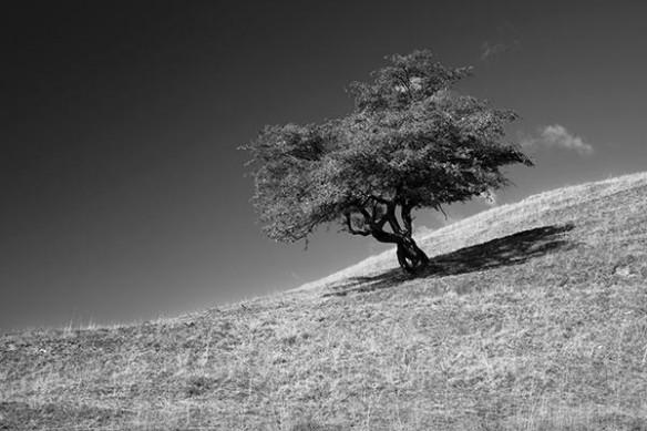 prairie zen